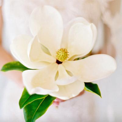 Shop for flowers seasonally sharp eye for Flowers in season in february