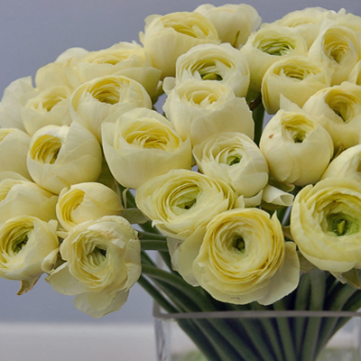 Flowers-by-Season-January-Ranunculus