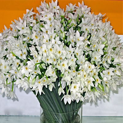 Flowers-by-Season-May-Paperwhites