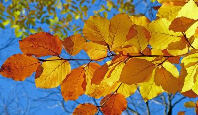 fall-foliage-2016-header