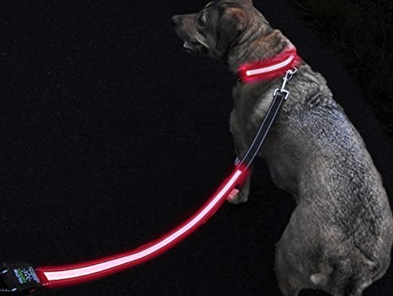 Pet tech, light up dog leash