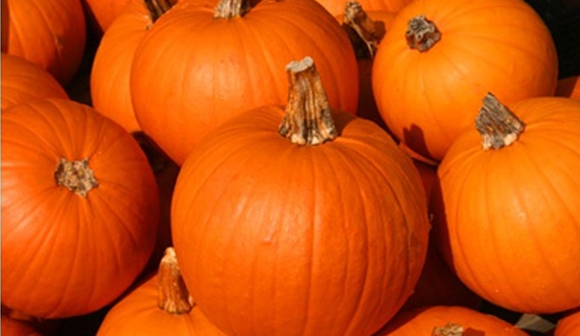 Pumpkin is a 'New' Food for 2019