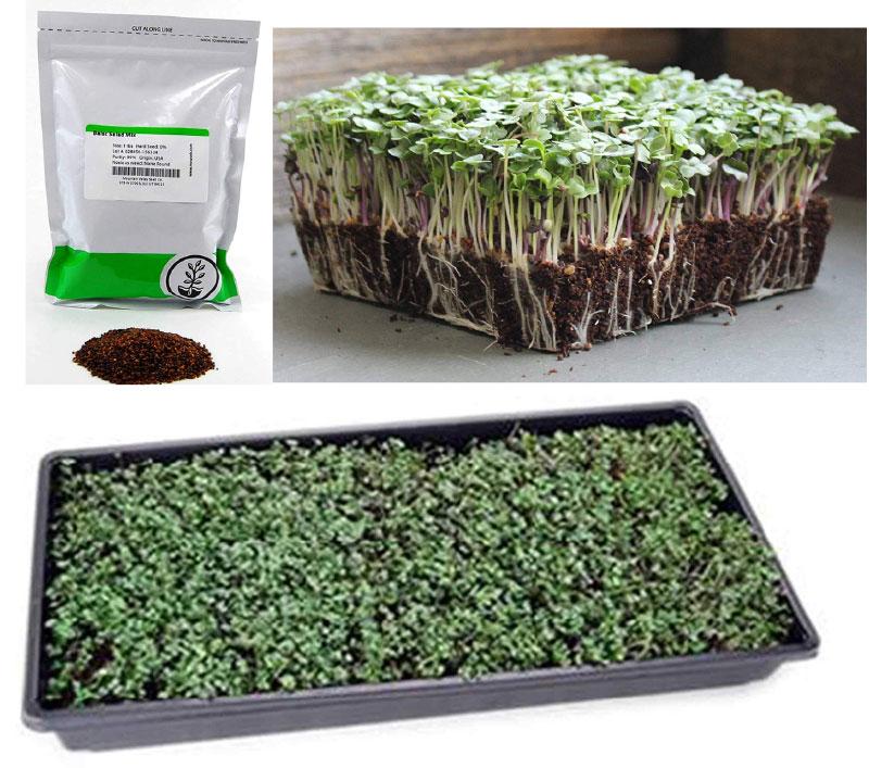 DIY Fresh microgreens