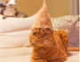 Check Out Hats For Cats Made From Their Shed Kitty Fur
