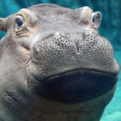 Quarantine entertainment Cincinnati Zoos