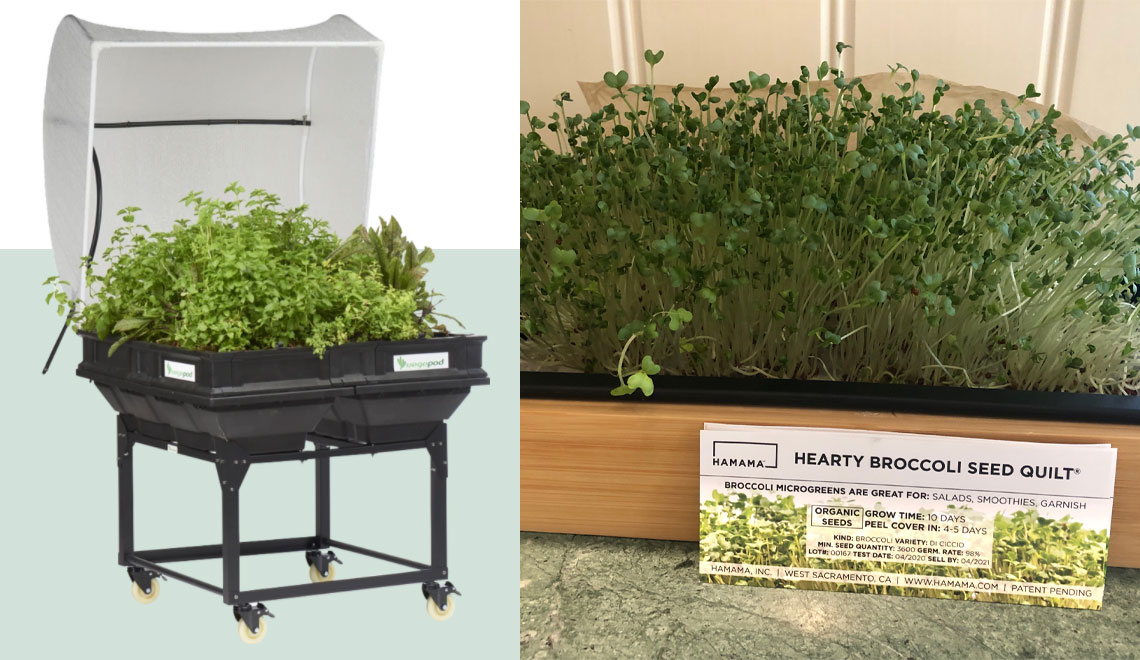 grow super greens at home