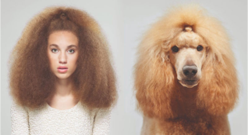 Dogs who look like their owners