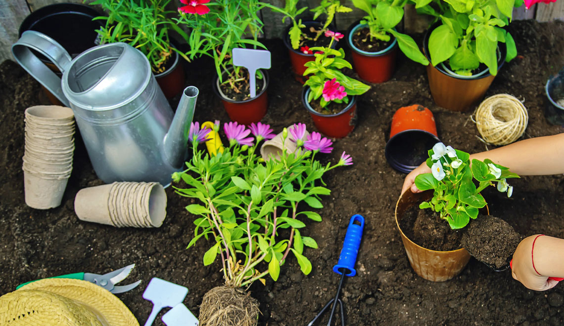 gardening advice from websites