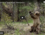 A Bear Having Fun